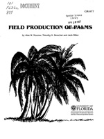 Field production of palms