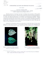 Coryspora leaf spot and stem rot of salvias