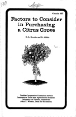 Factors to consider in purchasing a citrus grove