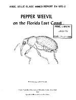 Pepper weevil on the Florida East Coast