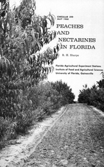 Peaches and nectarines in Florida