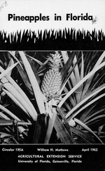 Pineapples in Florida