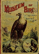 Museum of birds, or, Easy stories of the feathered kingdom