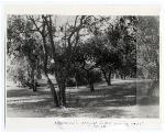 Orange grove at Marjorie Kinnan Rawlings' Cross Creek home
