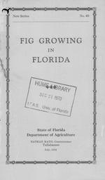 Fig growing in Florida.