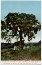The Surrender Tree, San Juan Hill. El Arbol donde se rindieron en la loma de San Juan, Santiago de Cuba