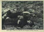 Obreros atados y fusilados por los rojos poco antes del abandono de Porcuna (Frente Sud)