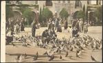 Pigeons - Plaza de Panama